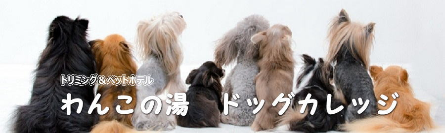 わんこの湯 ドッグカレッジ◎東京都大田区◎トリミング、ペットホテル